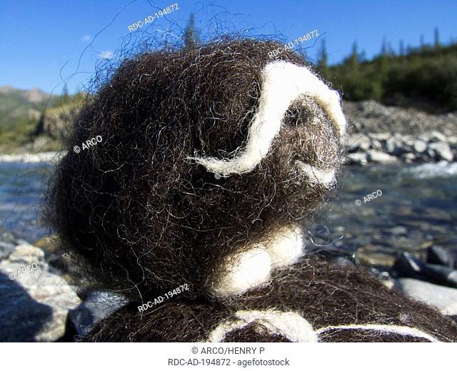 Musk ox, made of wool, Ivvavik national park, Yukon, Canada