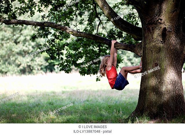 A young girl climbing a tree