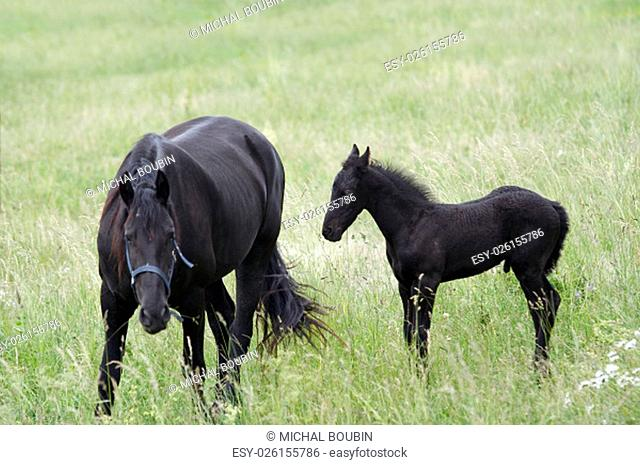 Image of the mare with colt on horse lot