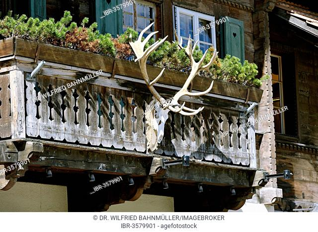 Antlers on the railings of a balcony, Gstaad, Bernese Oberland, Canton of Bern, Switzerland