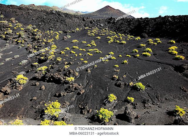 La Palma, Canary Island, blooming volcanic landscape at Cap de Fuencaliente, the southern tip of the island