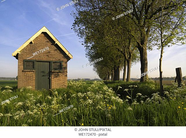 Shed near Dordrecht surrounded by wild flowers