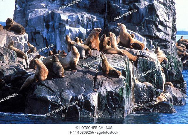 Alaska, Eumetopias jubatus, Gulf of Alaska, Haul, Needles, North Pacific, Prince William Sound, Steller sea lions, U