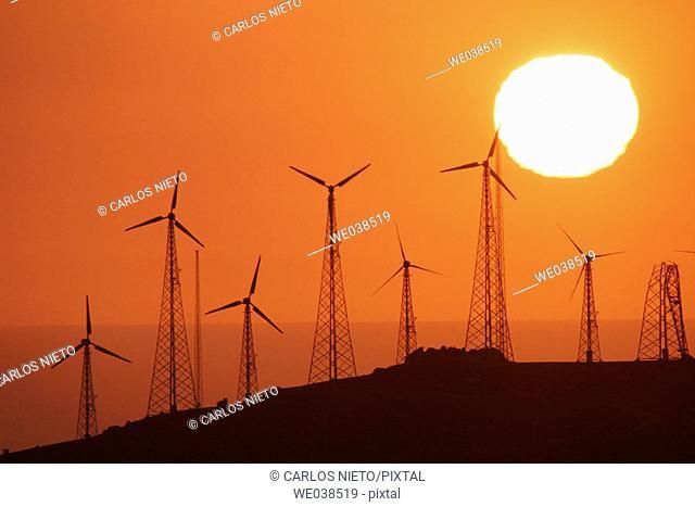 Windfarm in the evening. Tarifa, Cádiz province, Andalusia, Spain