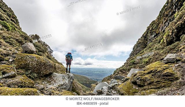 Hiker stands on slope, Pouakai Circuit, Egmont National Park, Taranaki, North Island, New Zealand