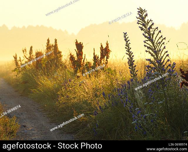 Poland. Podlasie region. Misty morning