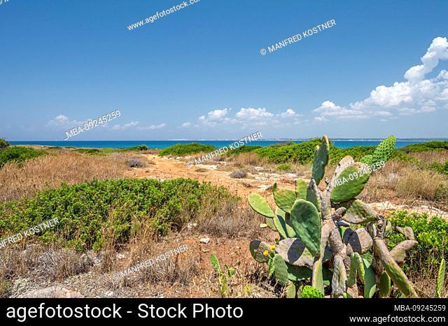 Punta Pizzo, Gallipoli, Salento, Puglia, Italy, Europe