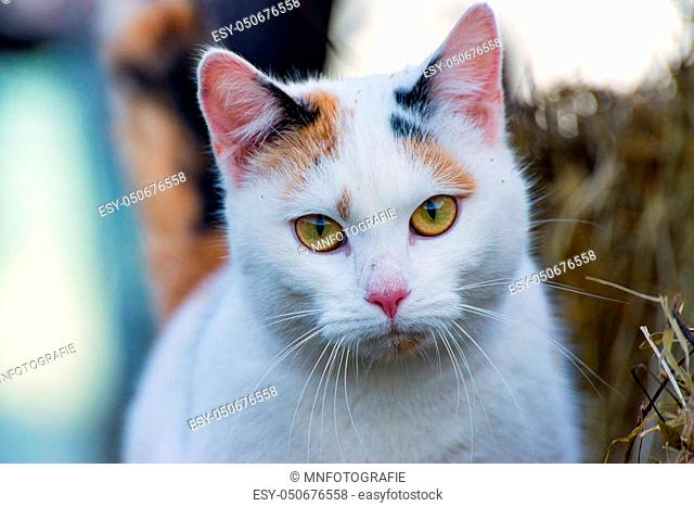 The calico cat is looking into the camera