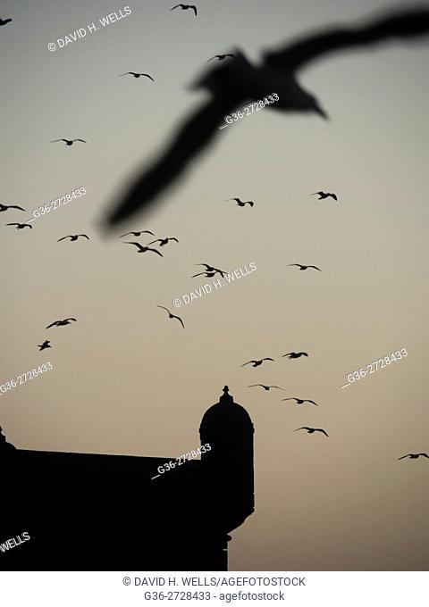 Flock of birds in sky, Essaouira, Morocco