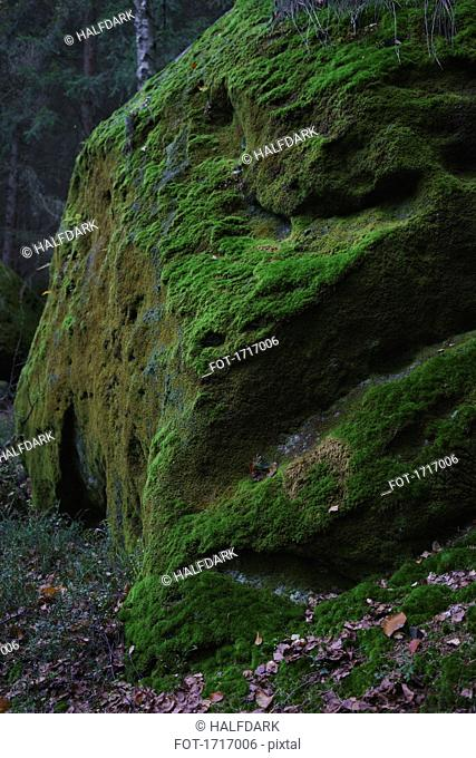 Green moss on rock in forest, Elbe Sandstone Mountains, Germany