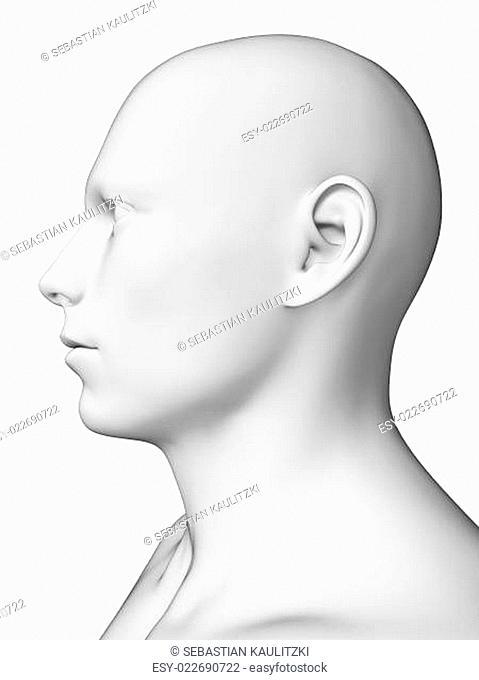 3d rendered illustration - white male head