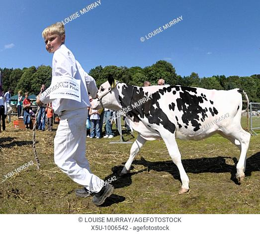 Boy leading prize winning calf around the show ring  Turriff Agricultural Show, Aberdeenshire 2009, one of Scotland's largest rural shows