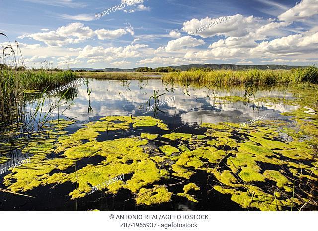 Parque Nacional de las Tablas de Daimiel. Province of Ciudad Real. Spain