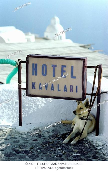Sign of a small hotel, leashed dog, Fira town, Santorini, Thira, Cyclades, Greece, Europe