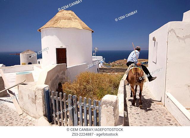 Greek man riding on a donkey near the windmills, Oia town, Santorini, Cyclades Islands, Greek Islands, Greece, Europe