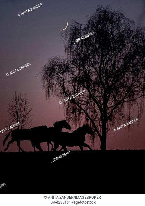 Horse at night under the moonlight, Germany