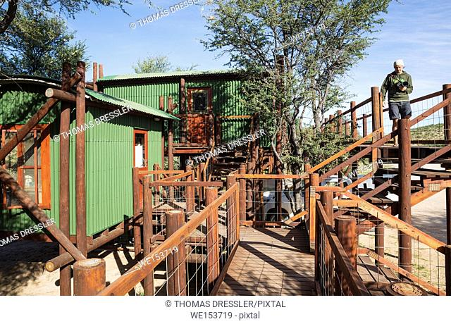 The Urikaarus Wilderness Camp with its cabins built on stilts is situated at the bank of the dry Auob riverbed. The tress are Camelthorn trees (Acacia erioloba)