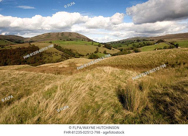 View of hilly countryside, Harter Fell, from Bluecaster, Howgills, Cumbria, England, autumn