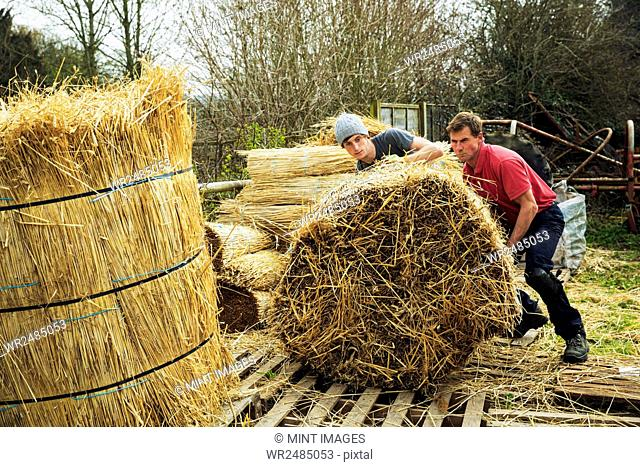 Two thatchers moving bundles of straw for thatching a roof