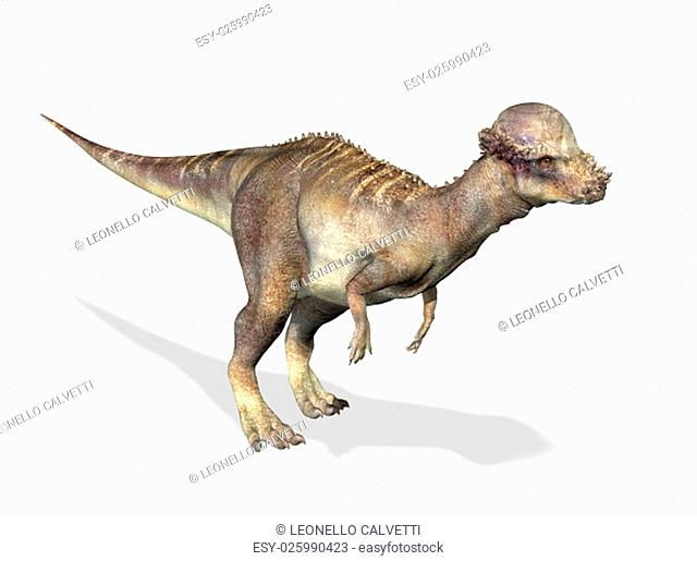 Photorealistic 3 D rendering of a Pachycephalosaurus. On white background with drop shadow and clipping path included