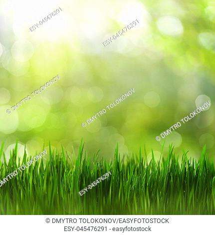 Summertime. Bright seasonal backgrounds with green grass and beauty bokeh
