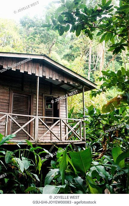 Wood Cabin in Jungle