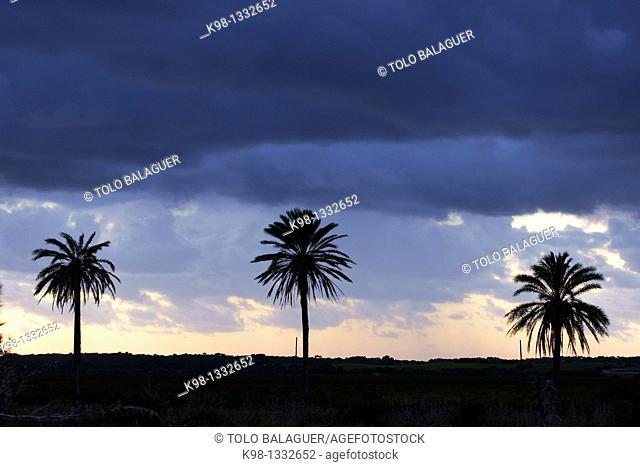 Es Salobrar Ses Salines Mallorca Baleares Spain Migjorn