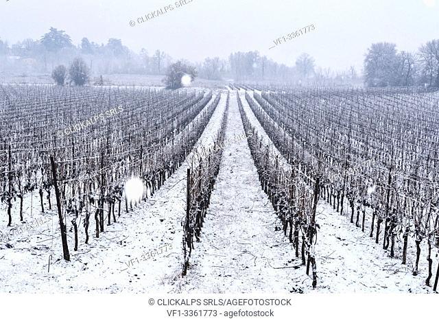 Snowfall in Franciacorta in Winter season, Brescia province, Lombardy district, Italy, Europe