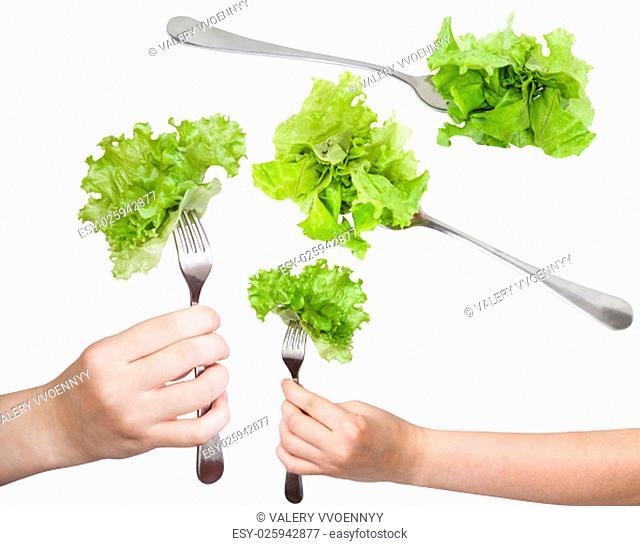 set of dinning forks with fresh leaf lettuce isolated on white background