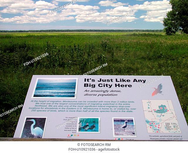 Seneca Falls, NY, New York, Finger Lakes Region, Montezuma National Wildlife Refuge, overlook
