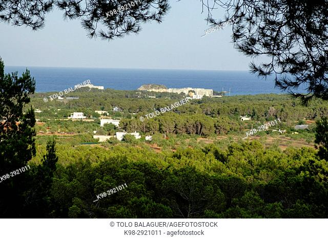 Pinewood and coast. Sant carles de Peralta, Ibiza, Balearic Islands, Spain