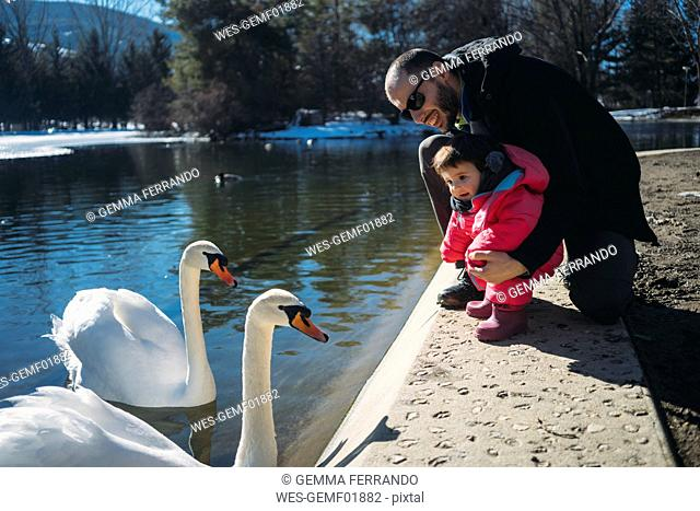 France, Osseja lake, cute baby with father watching the swans in a park