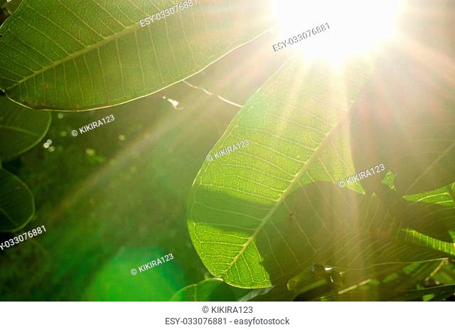 Natural green background and sun light