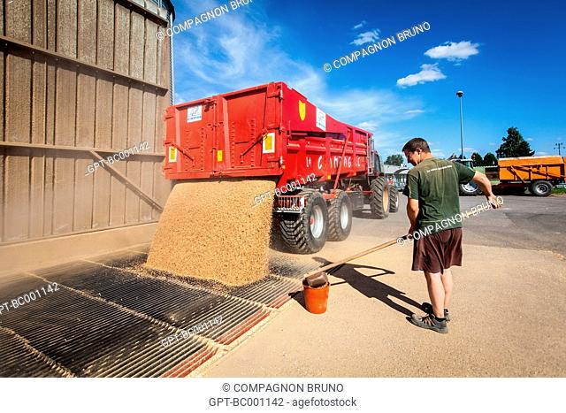 TAKING A SAMPLE, DELIVERY OF THE WHEAT HARVEST AT THE SILO OF THE GRAIN COOPERATIVE OF ESSAY, ORNE (61), FRANCE