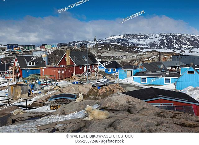 Greenland, Disko Bay, Ilulissat, Greenland Sled Dogs, canis lupis familiaris and town view