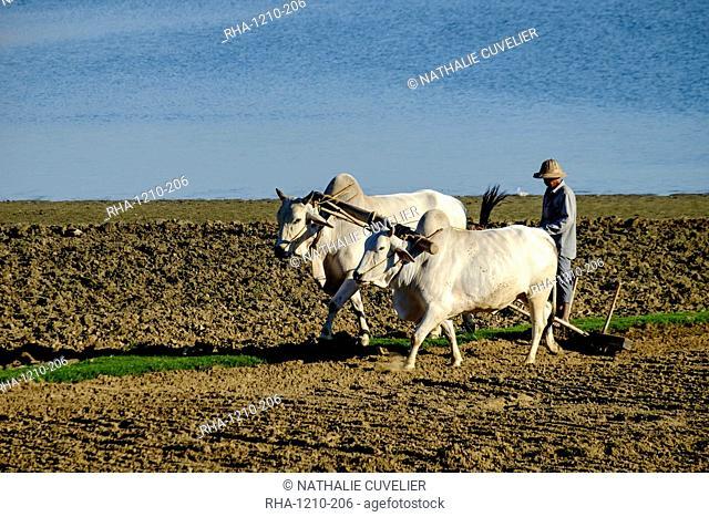 Farmer ploughing his field around Taungthman Lake, U Bein, Amarapura, Myanmar (Burma), Asia