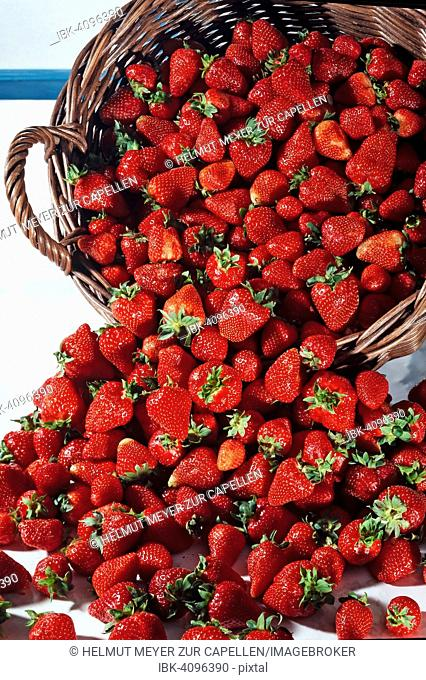 Basket with fresh strawberries