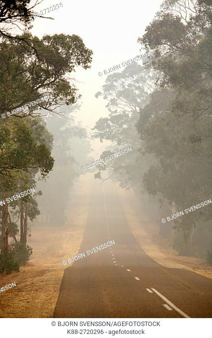 Smoke haze from 2006 bushfires in Gippsland, Victoria, Australia. This was the longest running bushfire in Australia's History