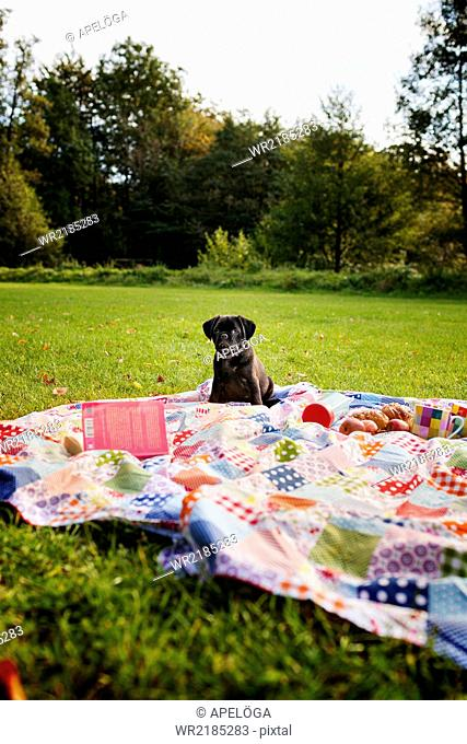 Black puppy on picnic blanket in forest