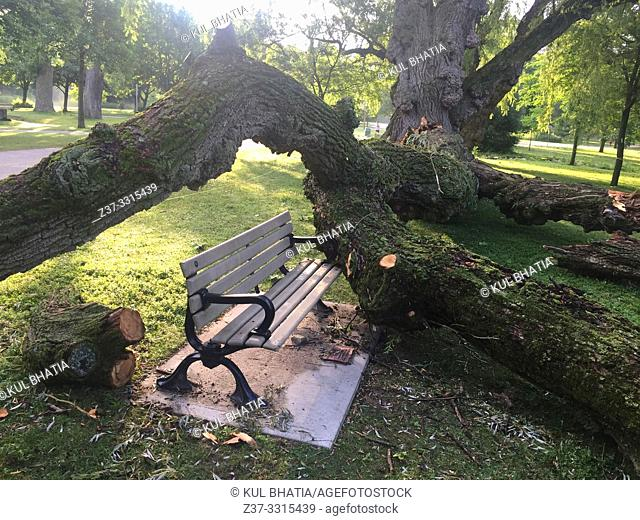 A heavy branch of an old tree comes crashing down on a park bench, Ontario, Canada. Because of theangle in the tree limb
