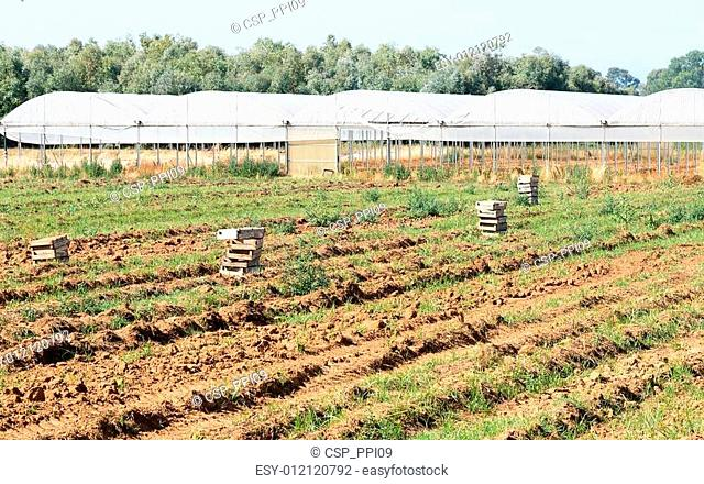 Field after the harvest, greenhouse