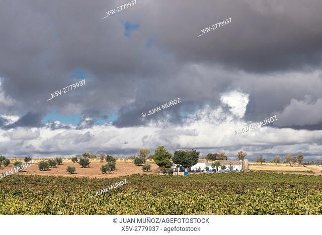Vineyards, Las Tablas de Daimiel National Park, Ciudad Real, Castilla La Mancha, Spain
