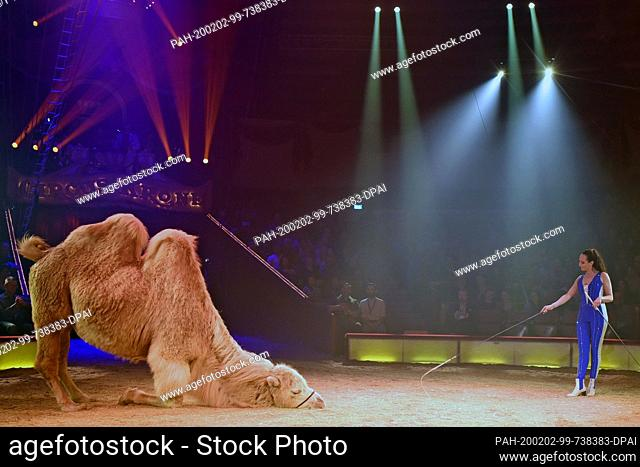"""01 February 2020, Bavaria, Munich: Jana Mandana Lacey-Krone shows her skills with a camel at the premiere of the 2nd winter programme under the motto """"""""My..."""