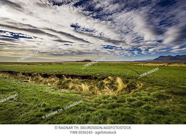 Sheep grazing, Borgarfjordur, Snaefellsnes Peninsula, Iceland