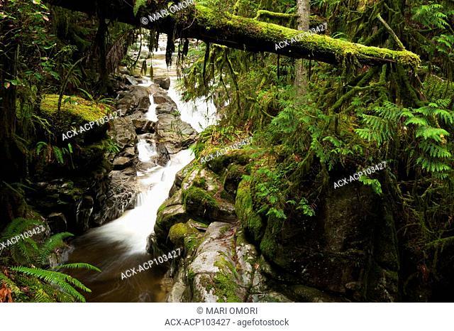 Cypress Creek running alongside the Cypress Falls trail