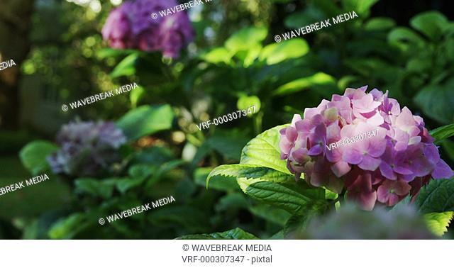Close-up of flower in garden