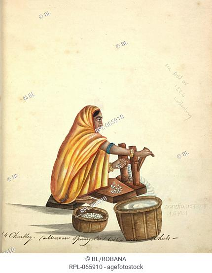 Woman ginning cotton. Watercolour. Originally published/produced in 1815-1820