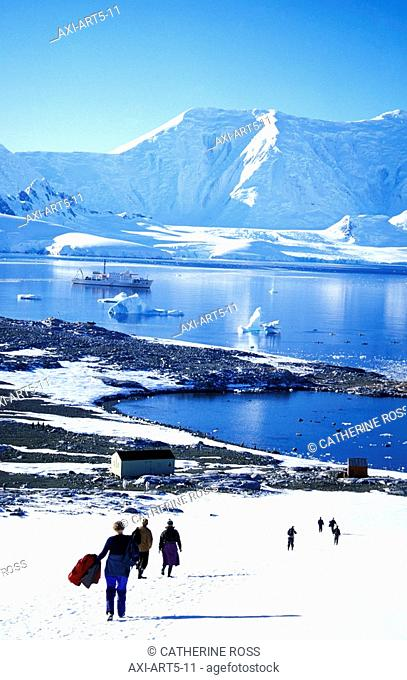 Wiencke Island, South Shetland Island, Antarctic Peninsula, Antarctic