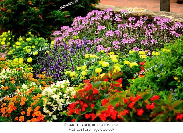 A many-colored garden in soft-focus, Pennsylvania, USA