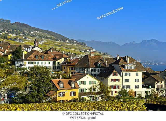 Winegrowing village of Rivaz in the Lavaux vineyards, Vaud, Switzerland